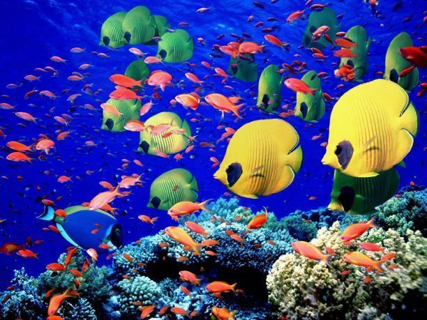 Animal idioms for More fish in the sea